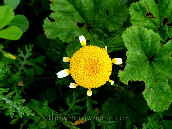 Wildflower4_4.26.2020_TWW