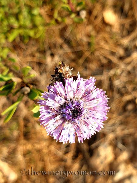 Wildflowers2_2.25.2020_TWW
