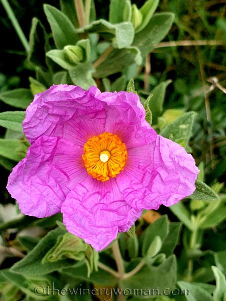 Wildflowers2_3.4.2020_TWW