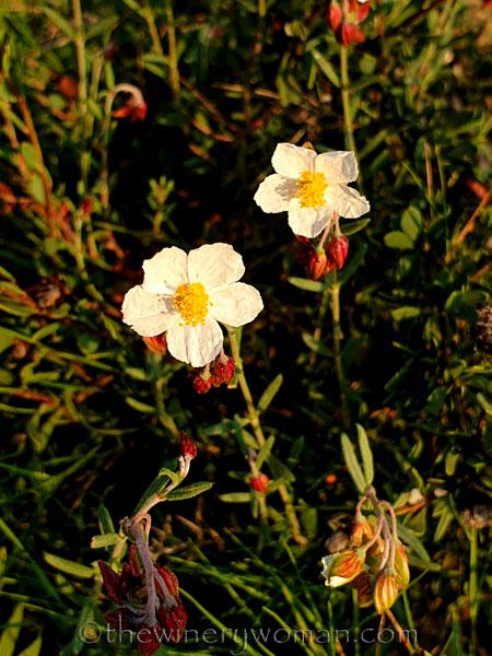Wildflowers_2.25.2020_TWW