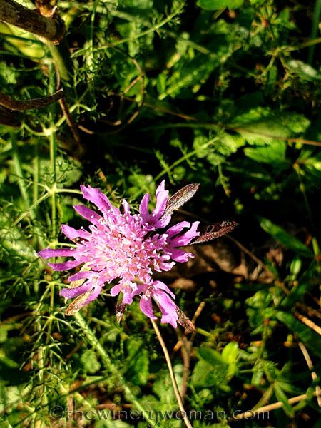Wildflowers_3.5.2020_TWW