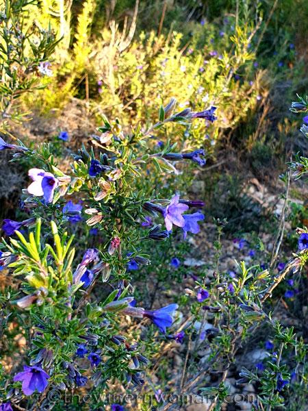 Wildflowers_3.7.2020_TWW