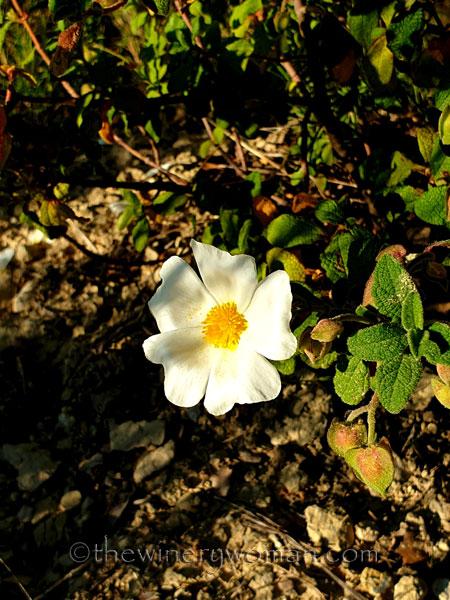 Wildflowers_3.8.2020_TWW