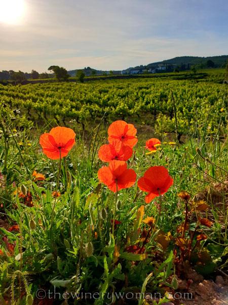 Poppies_Vineyard3_5.3.2020_TWW