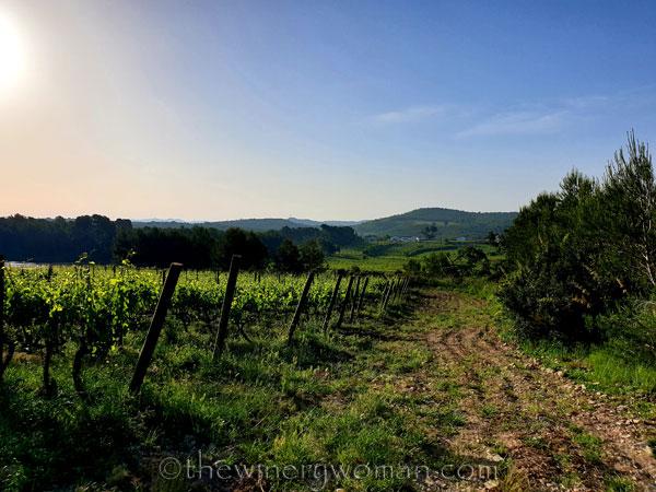 Vineyard_5.8.2020_TWW