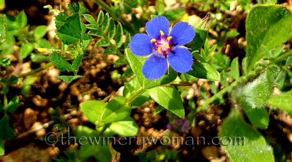 Wildflower_Freedom6_5.2.2020_TWW