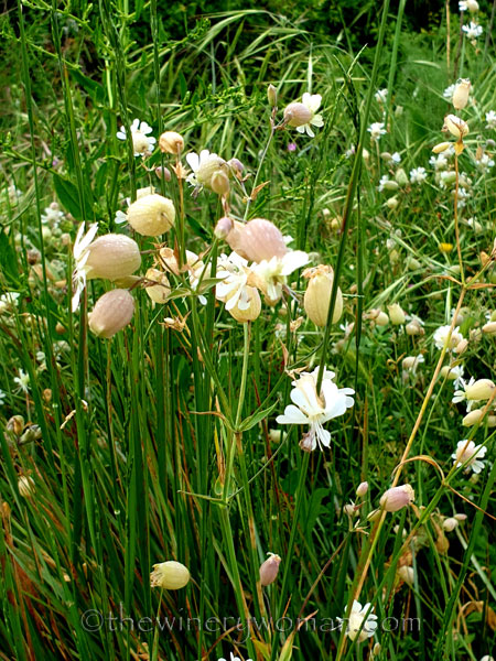 Wildflowers_5.5.2020_TWW